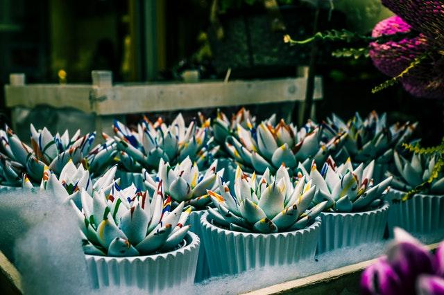 Μικρά ανθεκτικά φυτά
